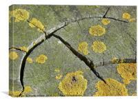 Wood curve, Canvas Print