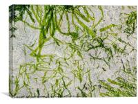 Seaweed Green, Canvas Print