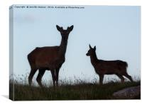 Red deer hind and young, Canvas Print