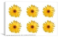 6 Yellow Daisies / flowers, Canvas Print