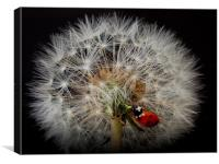 fairy ladybird, Canvas Print