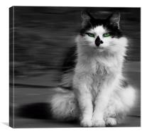 green eyed cat, Canvas Print
