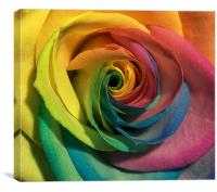 coloured rose, Canvas Print