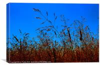 Wild Grasses, Canvas Print