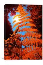 Orange Fern, Canvas Print