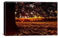 Sunset in the park, Canvas Print