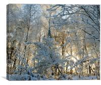 Winter Sunlight, Canvas Print