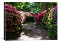 Isabella Plantation, Canvas Print