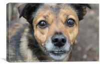 Little Dog, Big Eyes, Canvas Print