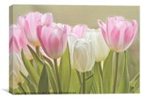 Translucent Tulips, Canvas Print