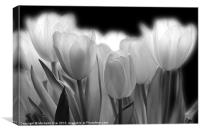 Glowing Tulips, Canvas Print