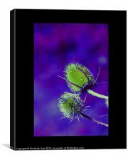Green and Purple Teasel, Canvas Print