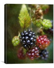 Autumns Fruit, Canvas Print