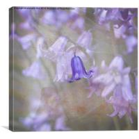 Perfect Bluebell, Canvas Print