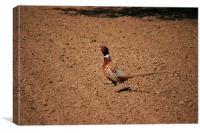 cock Pheasant, Canvas Print