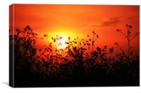 sunset over field of oil-seed Rape, Canvas Print