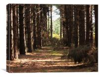 Brown Trees in a Forest, Canvas Print