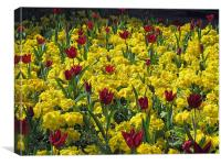 Red and yellow flowers., Canvas Print