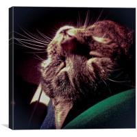 Cat Ray, Canvas Print