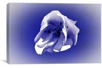 White petal on blue, Canvas Print