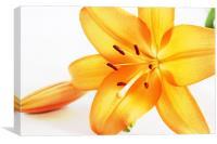 Orange Flower2, Canvas Print
