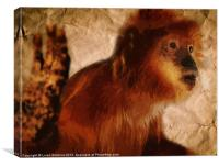 OOO You Little Monkey, Canvas Print