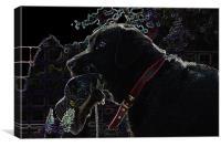 Glowing Labrador, Canvas Print