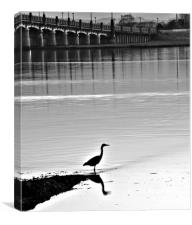 Heron Fishing, Canvas Print
