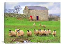 Sheep - Wensleydale, Canvas Print