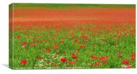 Poppies In Oxfordshire, Canvas Print