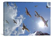 Brighton Seagulls, Canvas Print