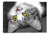 The Eyes Have It !!, Canvas Print