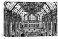 Natural History Museum - London, Canvas Print