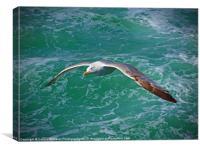 Seagull Brighton, Canvas Print