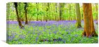 Cotswold BlueBells, Canvas Print
