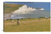 Sheep and the Seven Sisters, Canvas Print