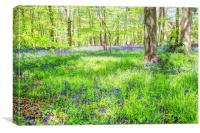 Bluebell Woodlands 1, Canvas Print