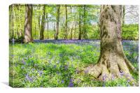 Bluebell Woodlands 2, Canvas Print