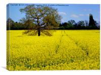 Mellow Yellow oilseed rape, Canvas Print