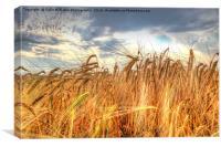 Winter Barley 1, Canvas Print