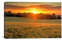 Sunrise over A Field of Winter Barley, Canvas Print