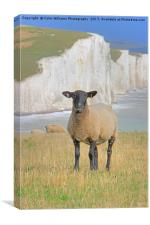 Sheep and the Seven Sisters 3, Canvas Print