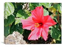 Red Hot Hibiscus, Canvas Print