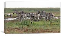 Zebra Group, Canvas Print