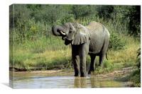 Elephant Drinking, Canvas Print