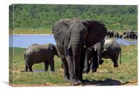 Elephant , Canvas Print