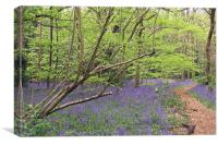 Winterbourne Bluebells , Canvas Print