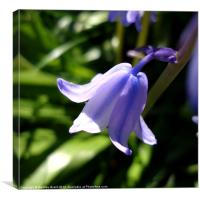 Blue Bell Close Up, Canvas Print