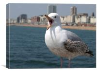 seaside seagull in brighton, Canvas Print