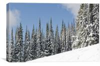 SILVERSTAR HILL snow covered alpine meadow silver star, Canvas Print